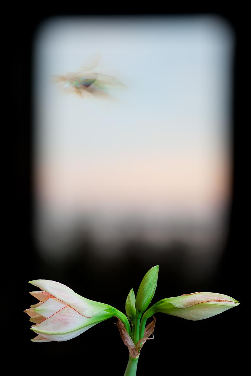 OLIVIA PARKER,  Evergreen Window,  2012