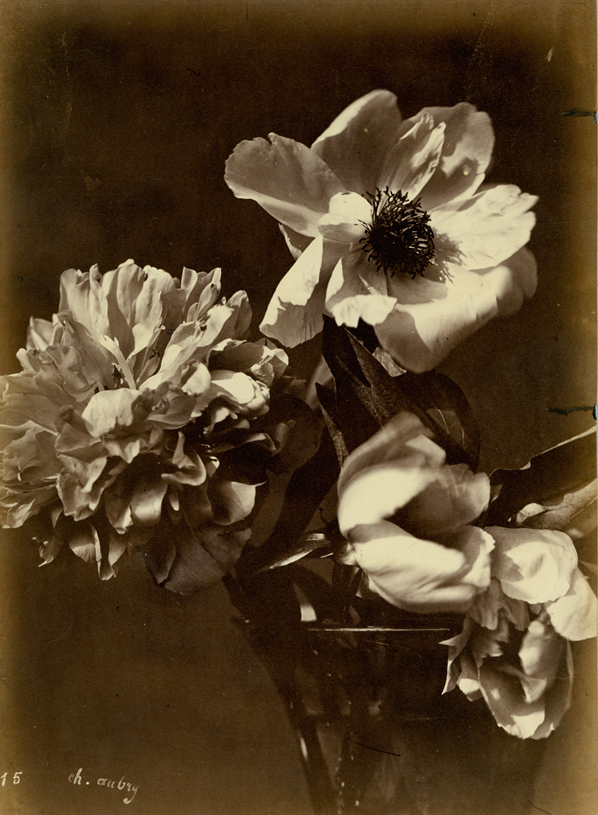 CHARLES AUBREY,  Flower Arrangement (#15),  c. 1860s