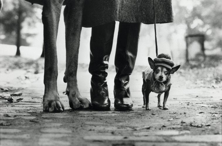 ELLIOTT ERWITT New York City, (dog legs), 1974