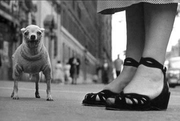 ELIOTT ERWITT,  New York (Chihuahua) , 1946