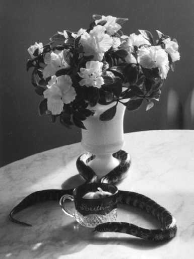 ANDRE KERTESZ, Still Life with Snake, January 12, 1960