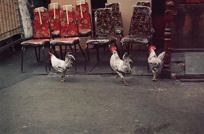 HELEN LEVITT, Untitled (Three Roosters), New York City , 1971