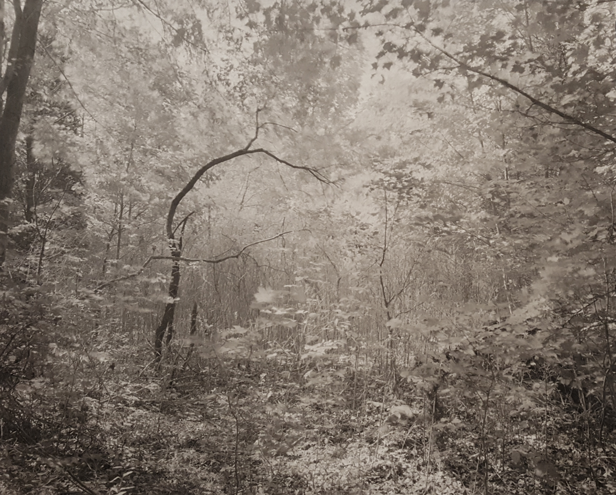 JOHN YANG,  Mianus River Gorge ,  Bedford, New York , 1979