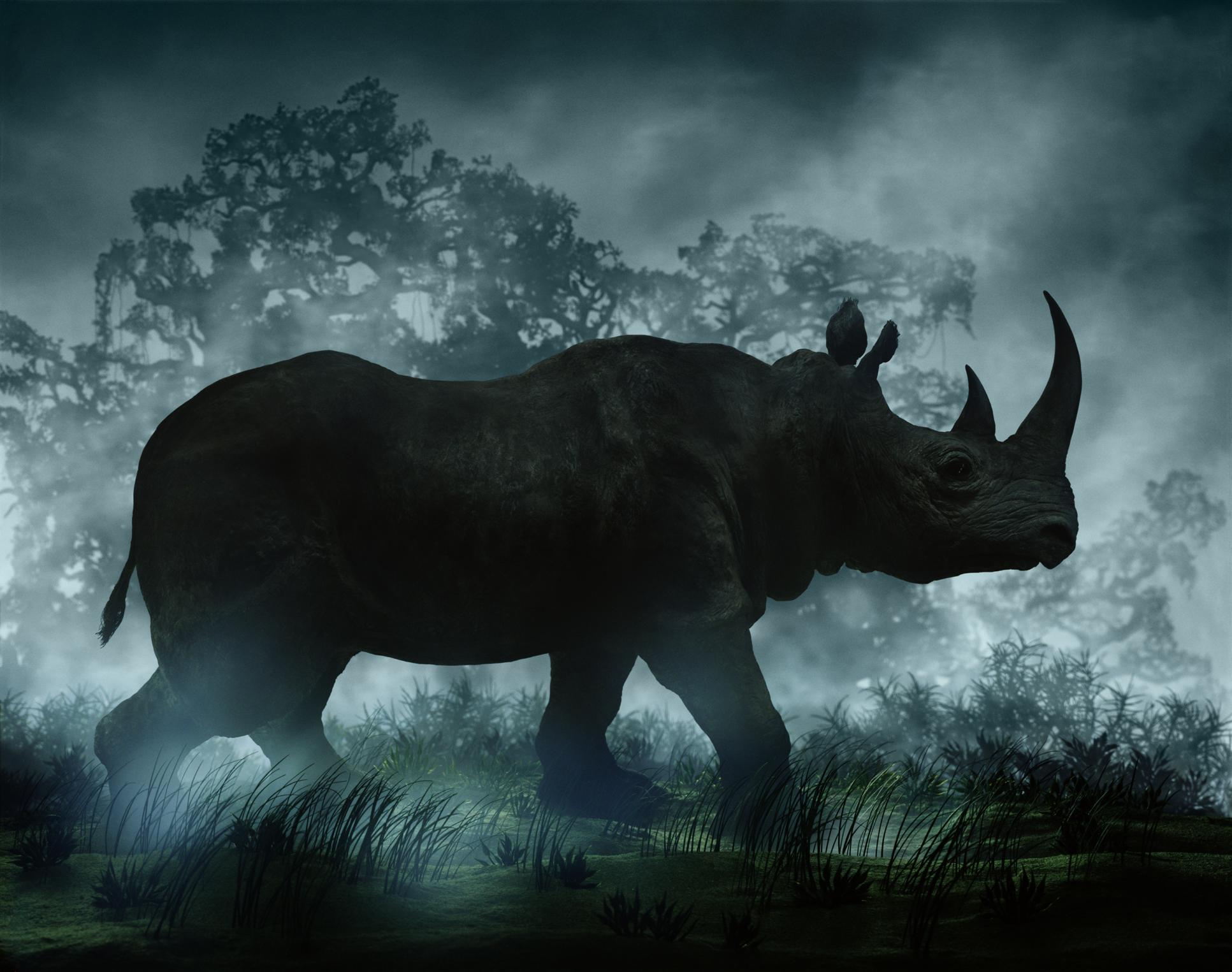 DIDIER MASSARD, Rhinoceros , 2004