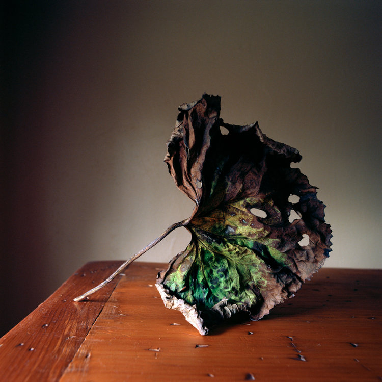 WENDY BURTON,  Botanical No. 17 , 2014