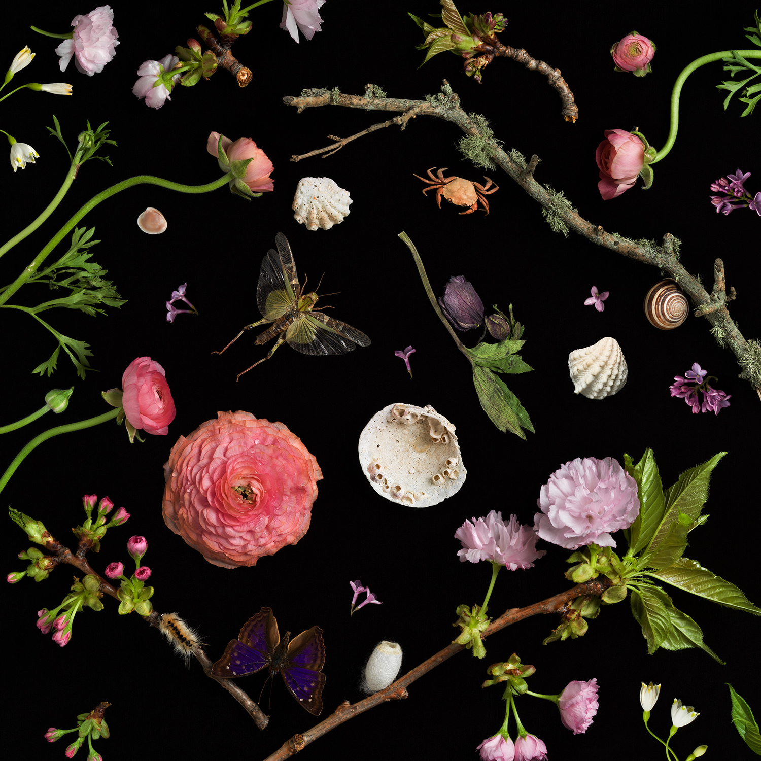 "Botanical I, cHERRY bLOSSOMs   From the series ""Botanicals"""