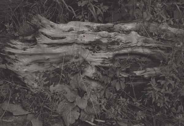 KOICHIRO KURITA,  Deep Forest, Finger Lake, New York,  1994