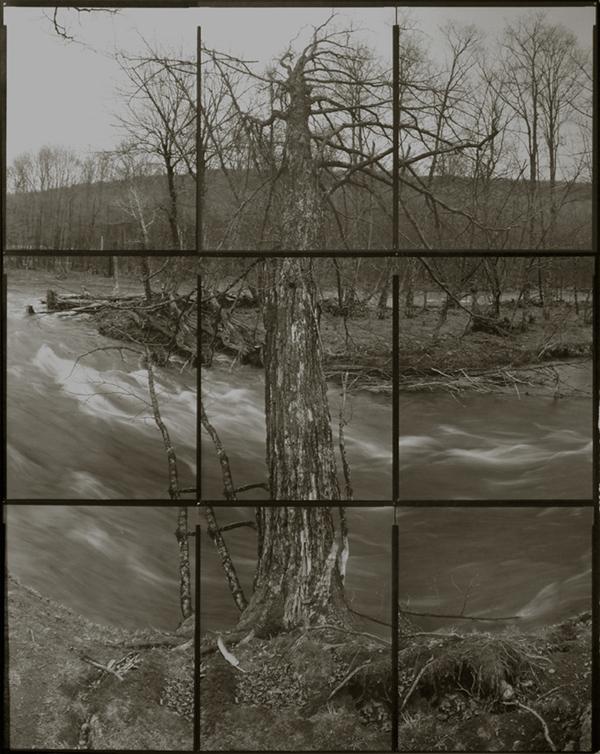 KOICHIRO KURITA,  A Tree at the River, Catskill, New York,  2006