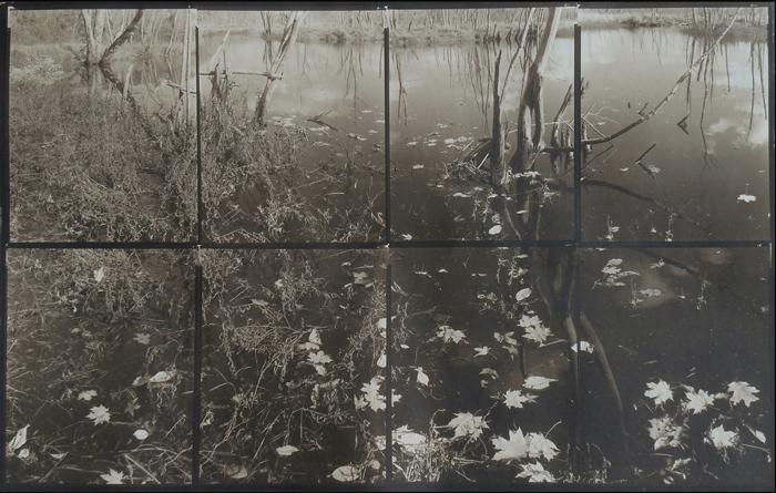 KOICHIRO KURITA,  Leaves in Dark, Ipswich River, Massachusetts,  2015