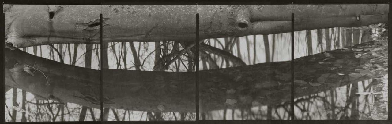 KOICHIRO KURITA,  Vernal Pond, Southold, New York,  2009