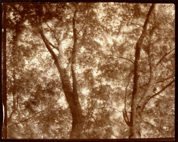 KOICHIRO KURITA,  May Leaves, Southold, New York,  2010