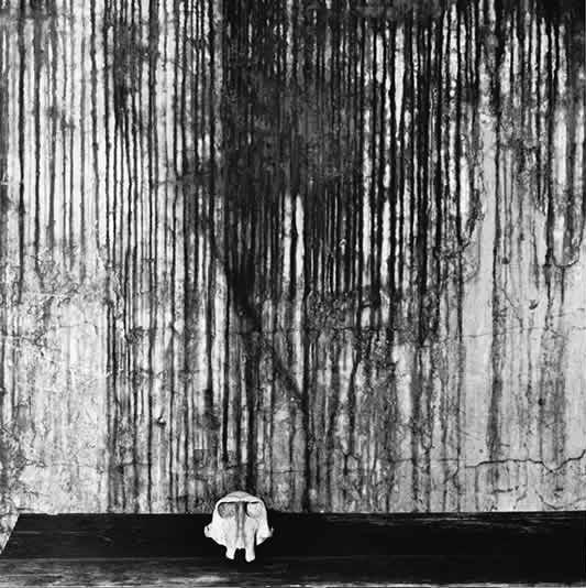 ROGER BALLEN,  Ape Skull, 2002
