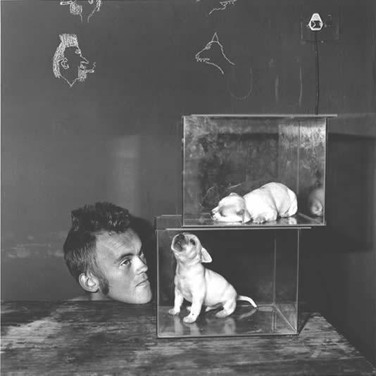 ROGER BALLEN,  Puppies in Fishtanks, 2000