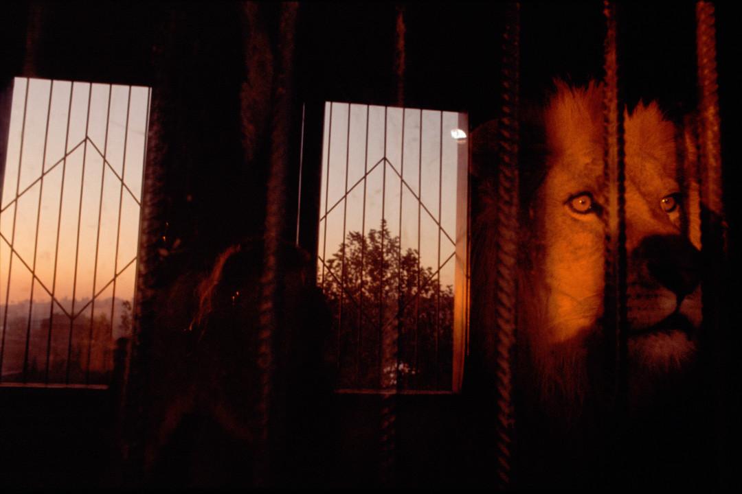 REBECCA NORRIS WEBB,  Istanbul, Turkey,  2003