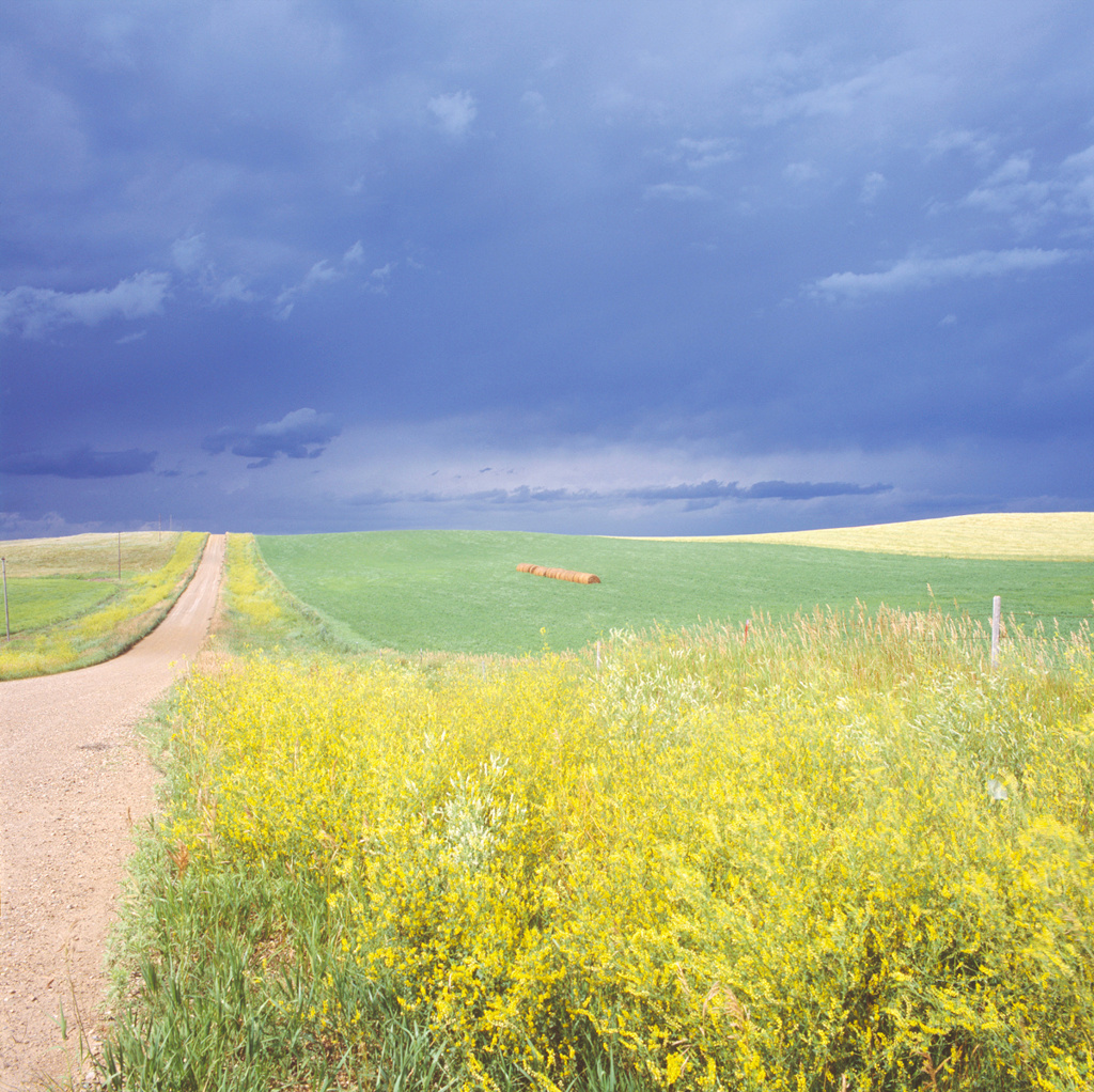 Flasher, North Dakota