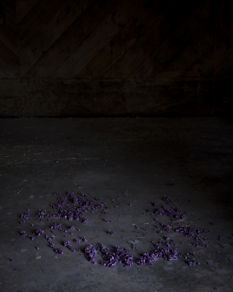 CIG HARVEY,  Ring of Lilacs , 2018