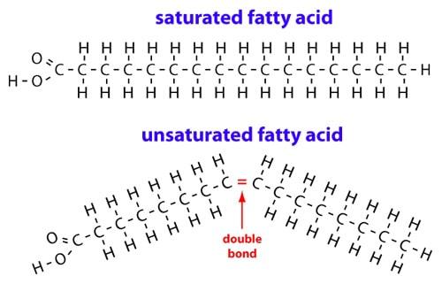 fat diagram.jpg