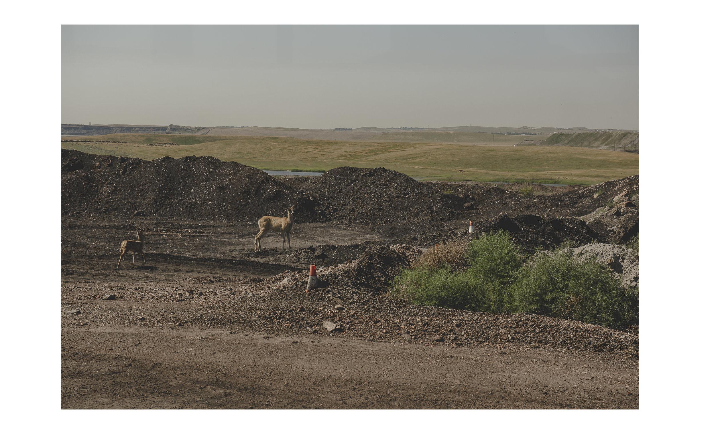 coal15.jpg
