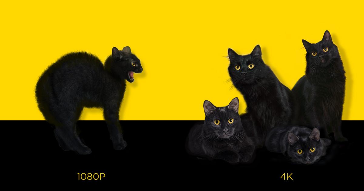 Hisense_FB_1200x630-catday_v2.jpg