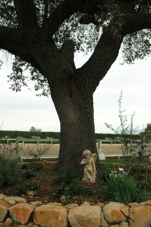 Angel-under-tree.jpg