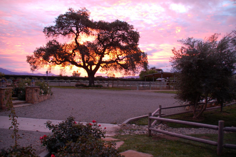 2008-gorgeous_sunset.jpg