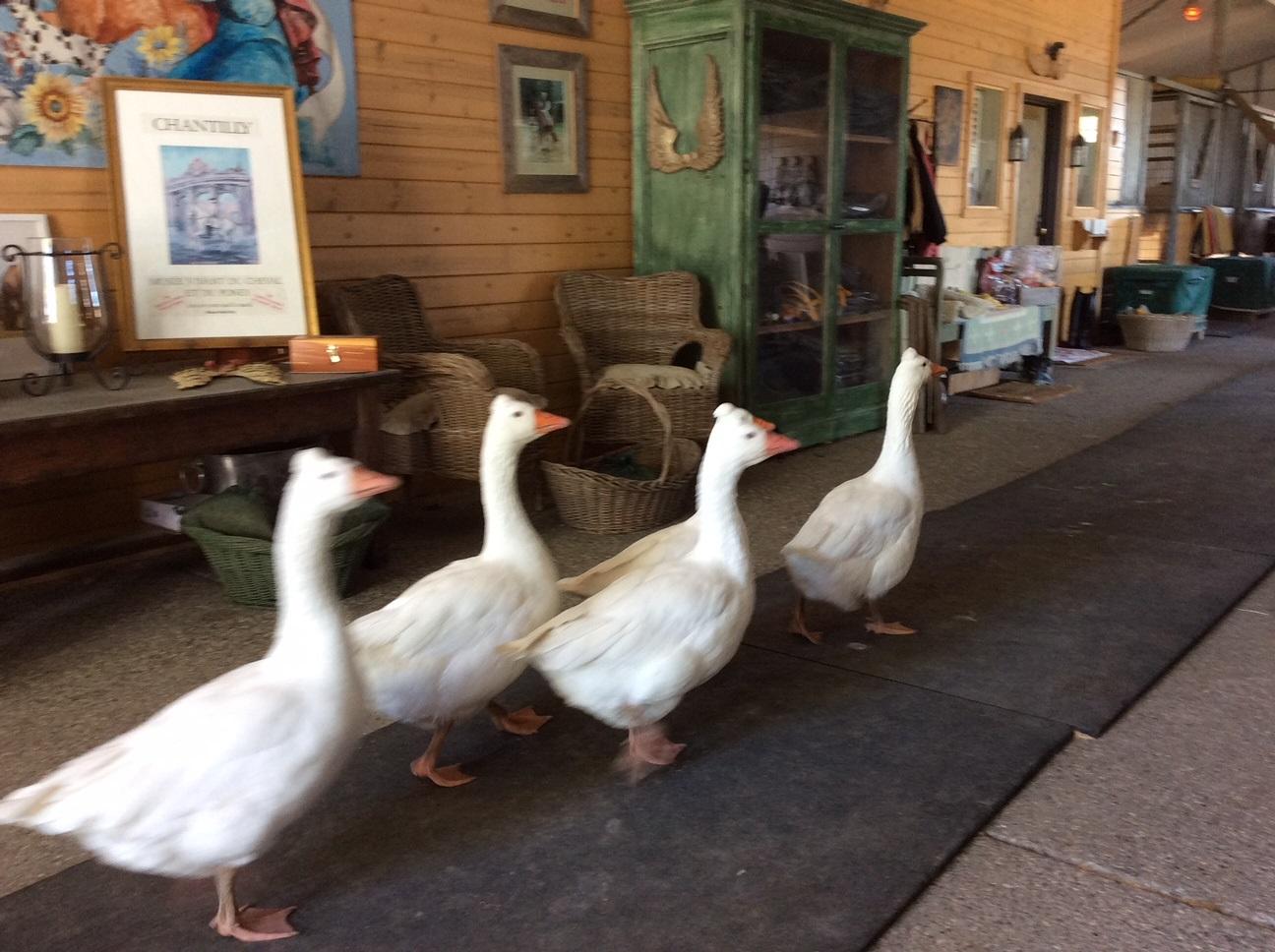 the_geese.jpg