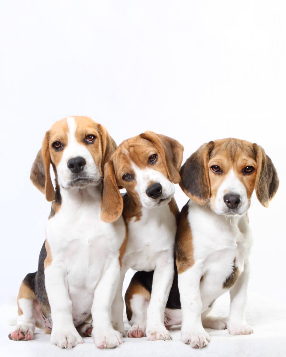 hounds-2.jpg