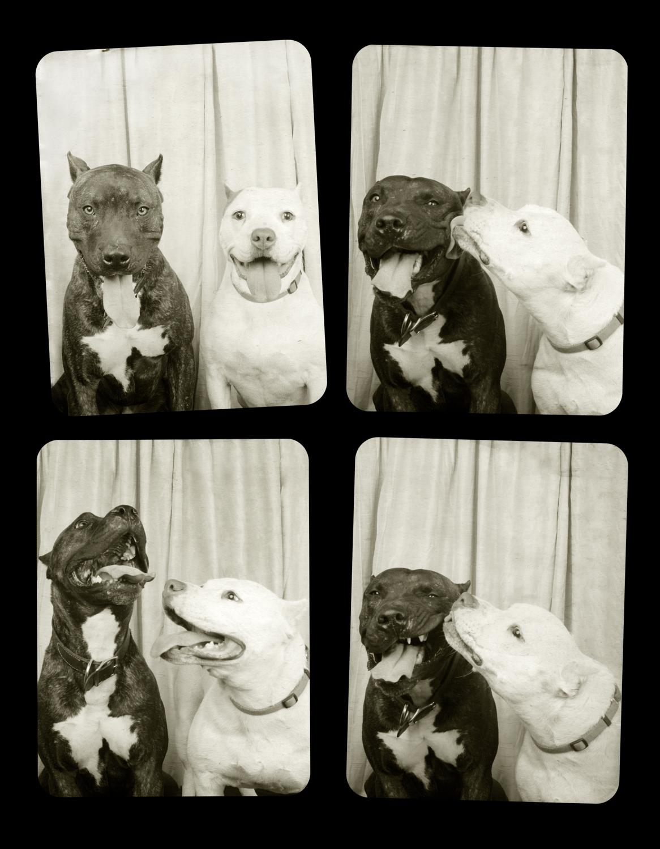 01.Pitbulls-Tucker_Petunia-Final.jpg