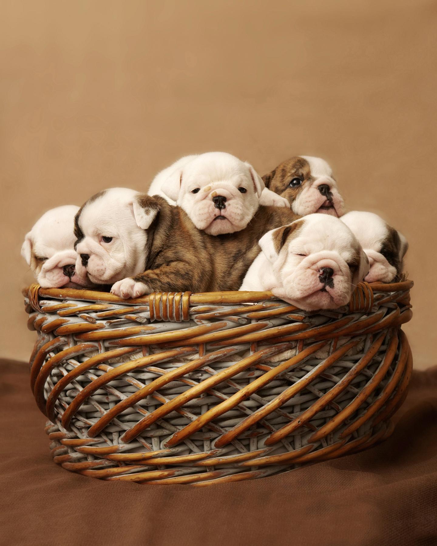 bulldogsin basketc.jpg
