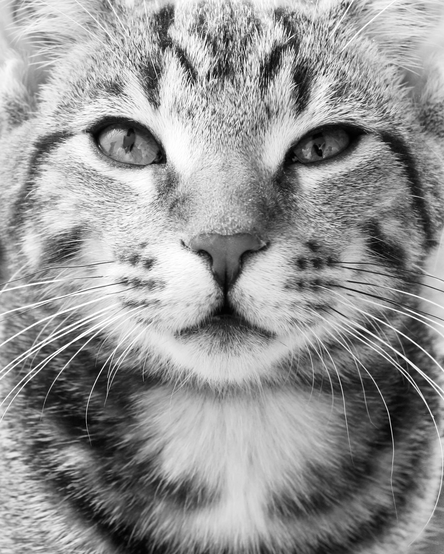 closeupcat.jpg