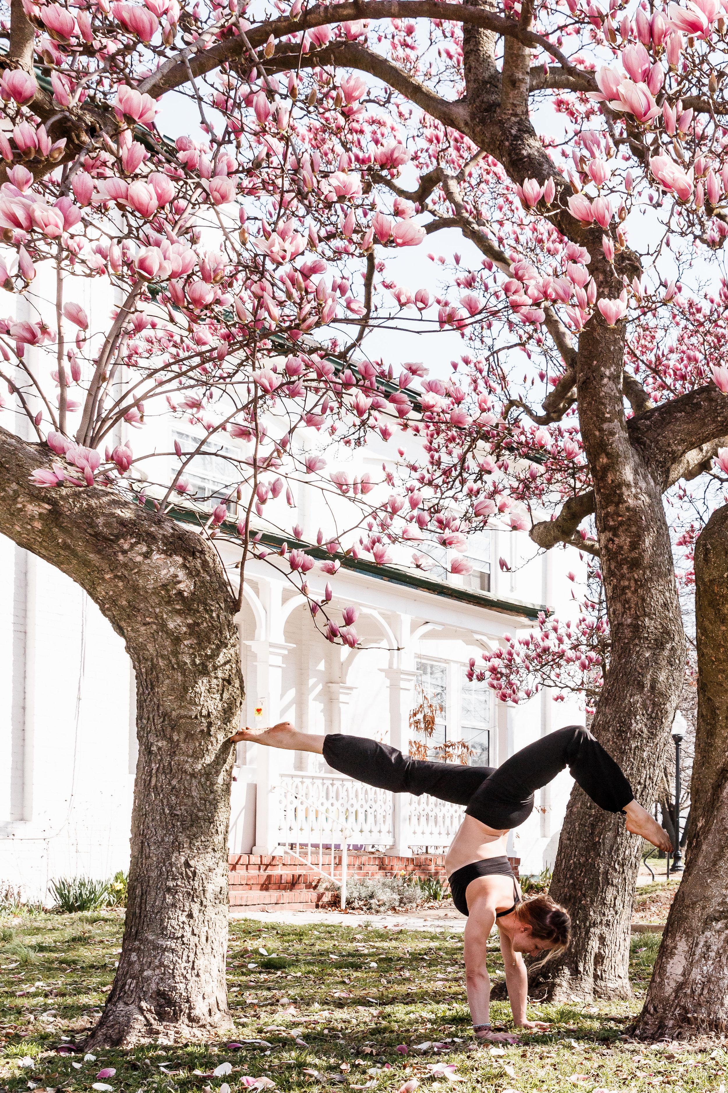 When the magnolia blossoms...