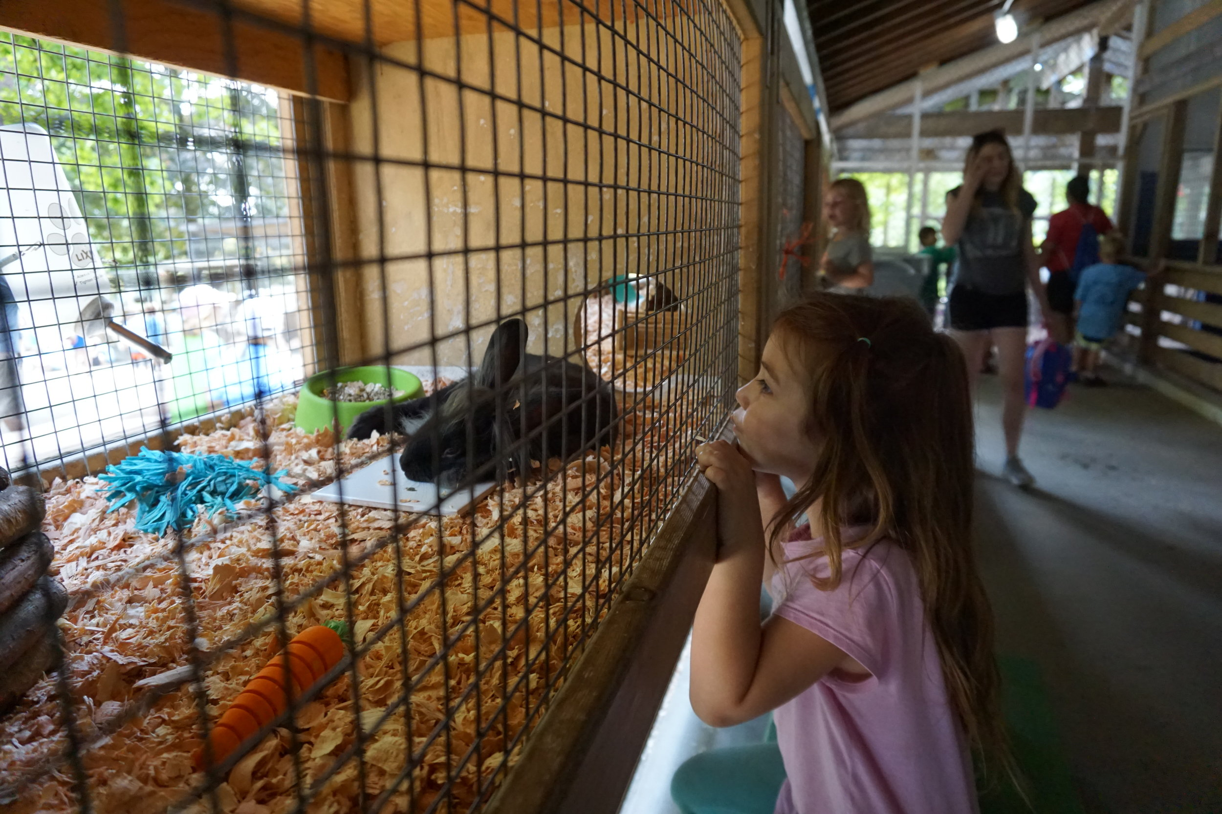 Do you carrot all about rabbits? Having fun at Queens Park Petting Zoo!