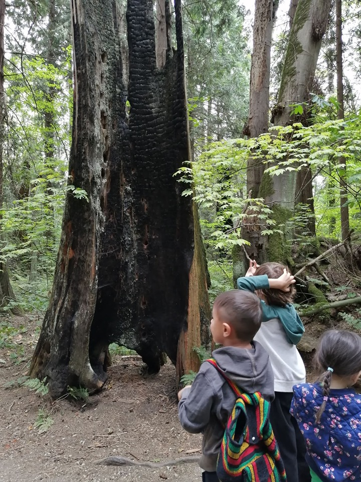 Cool things you might see in a forest - a tree struck by lightning! Look out for these the next time you're out in the woods