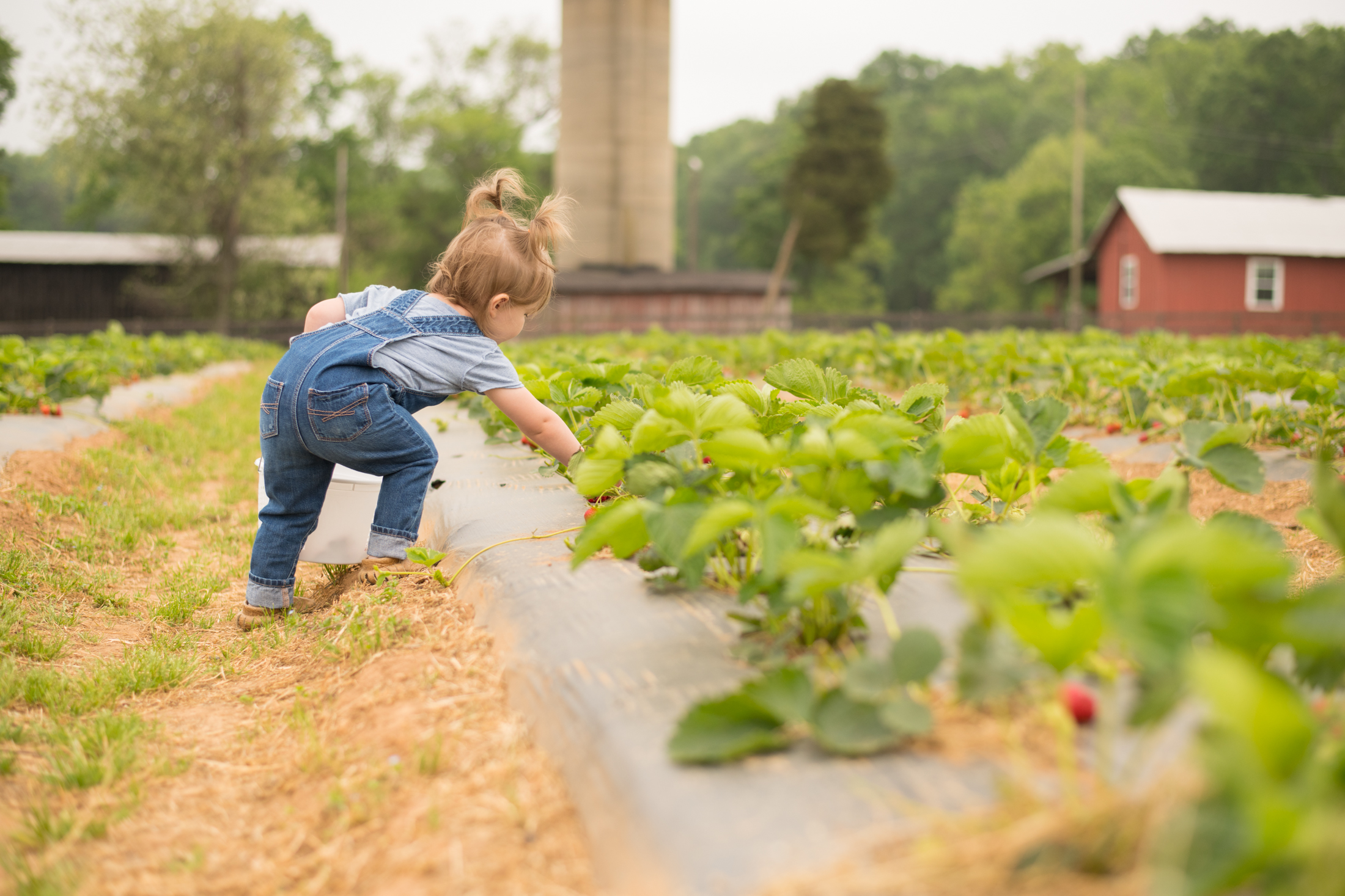 STRAWBERRY PICKING-6.jpg