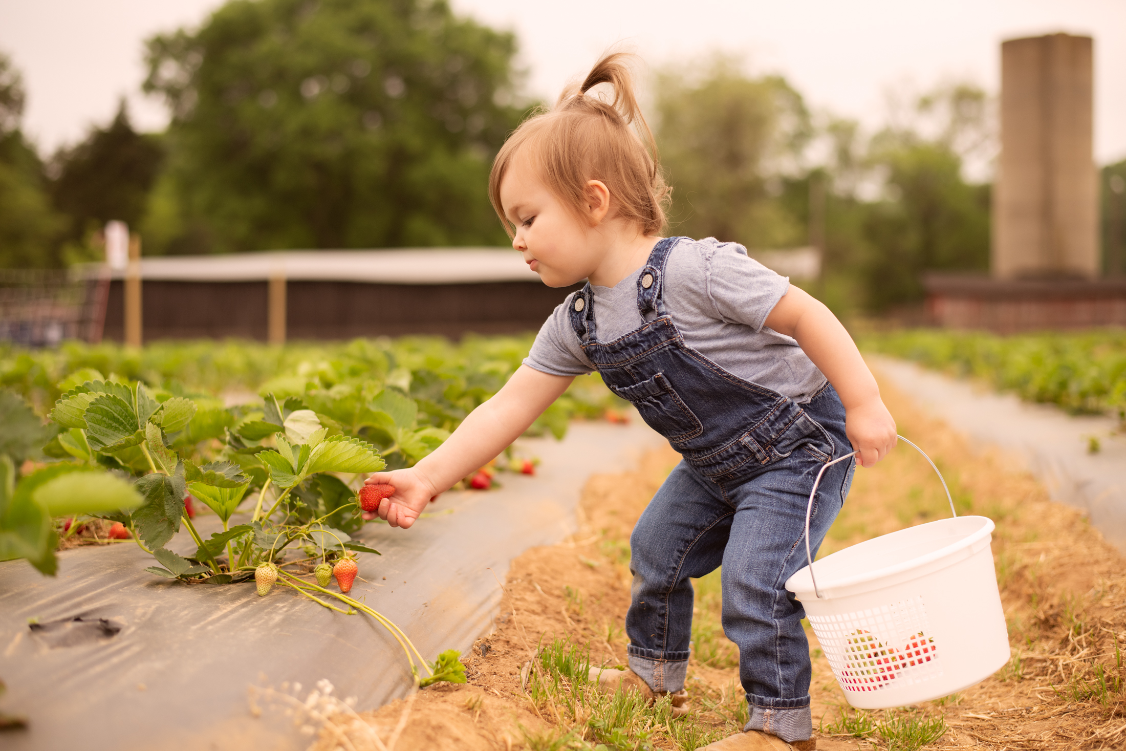 STRAWBERRY PICKING-7.jpg