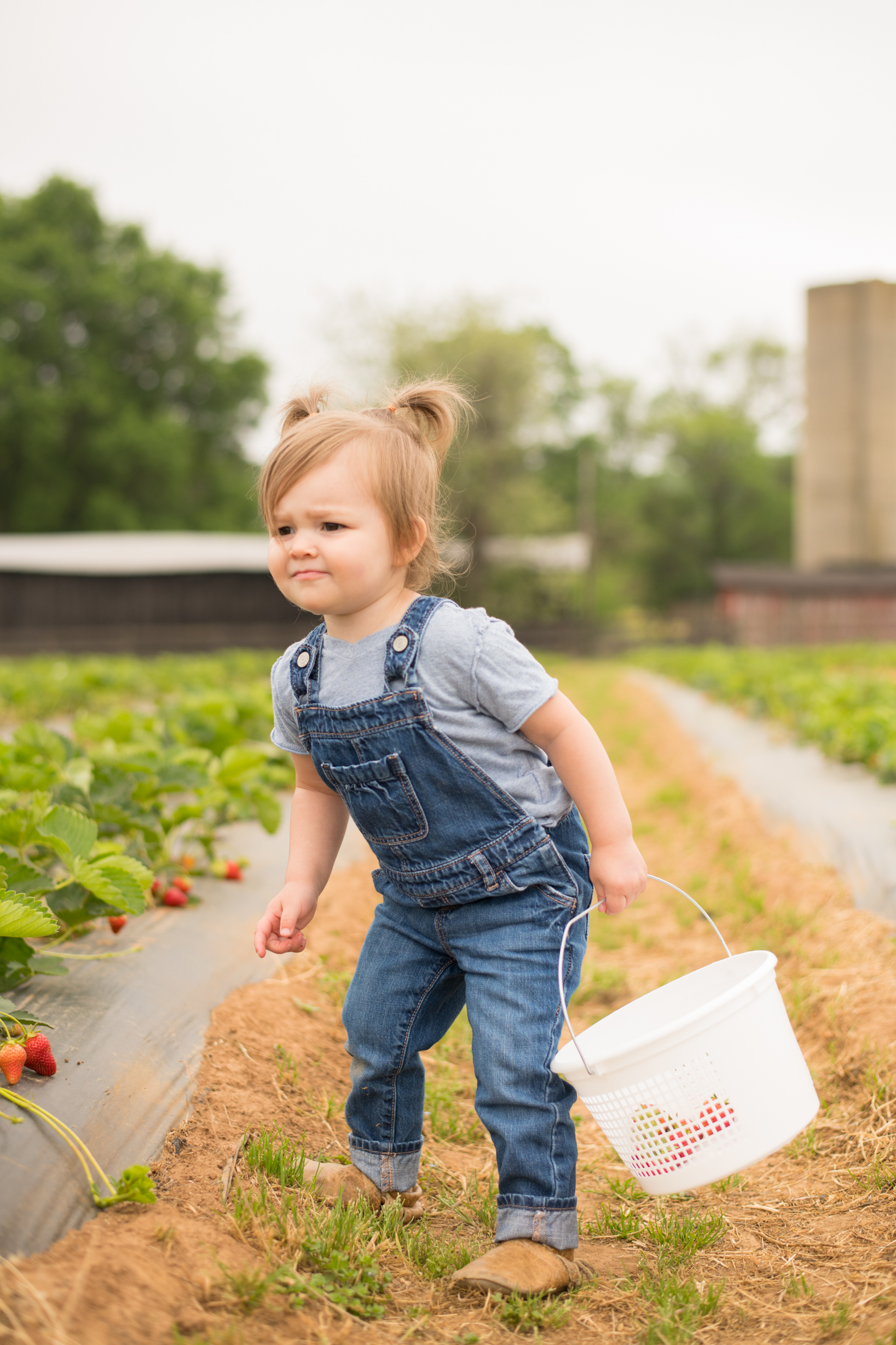 STRAWBERRY PICKING-9.jpg