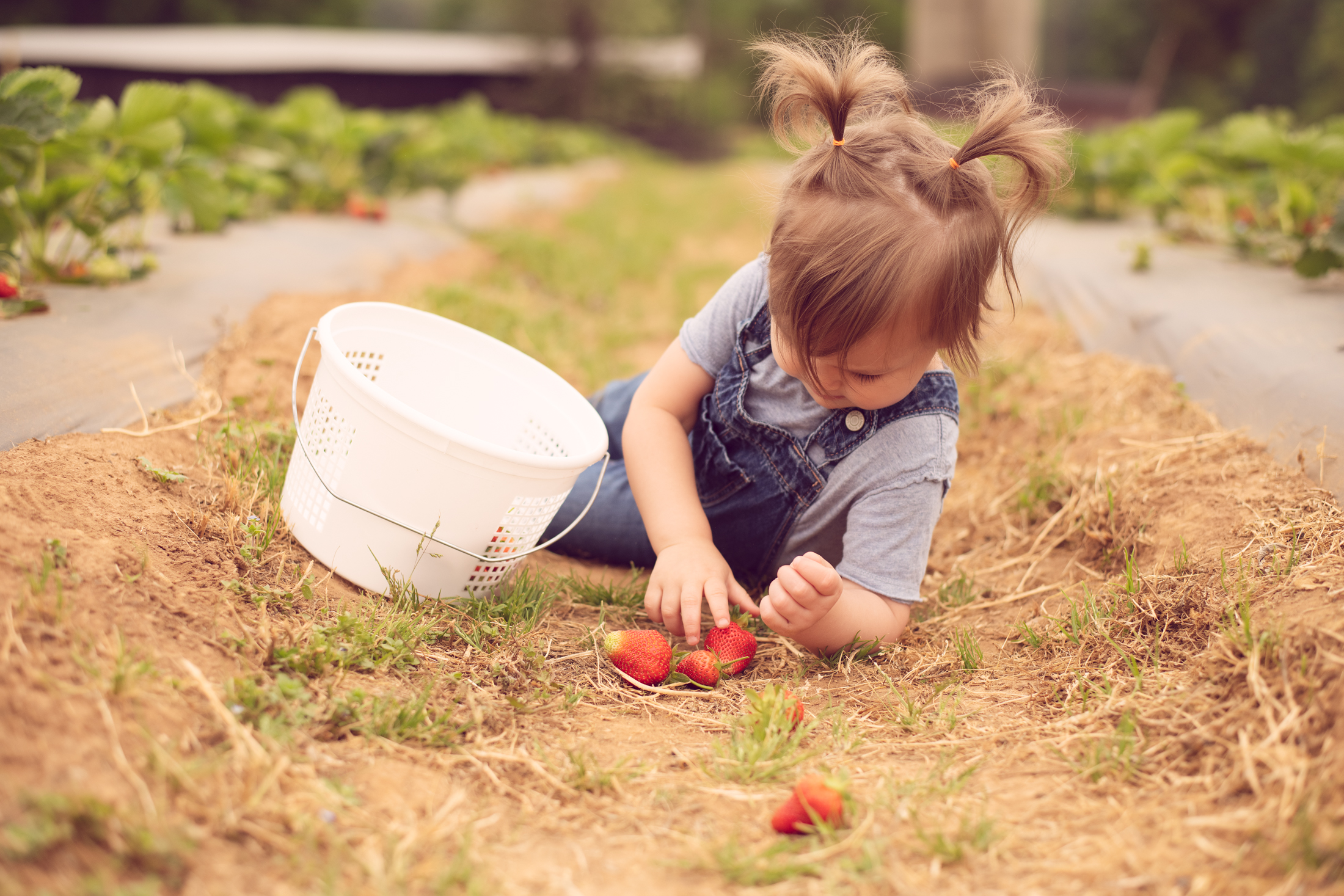 STRAWBERRY PICKING-29.jpg
