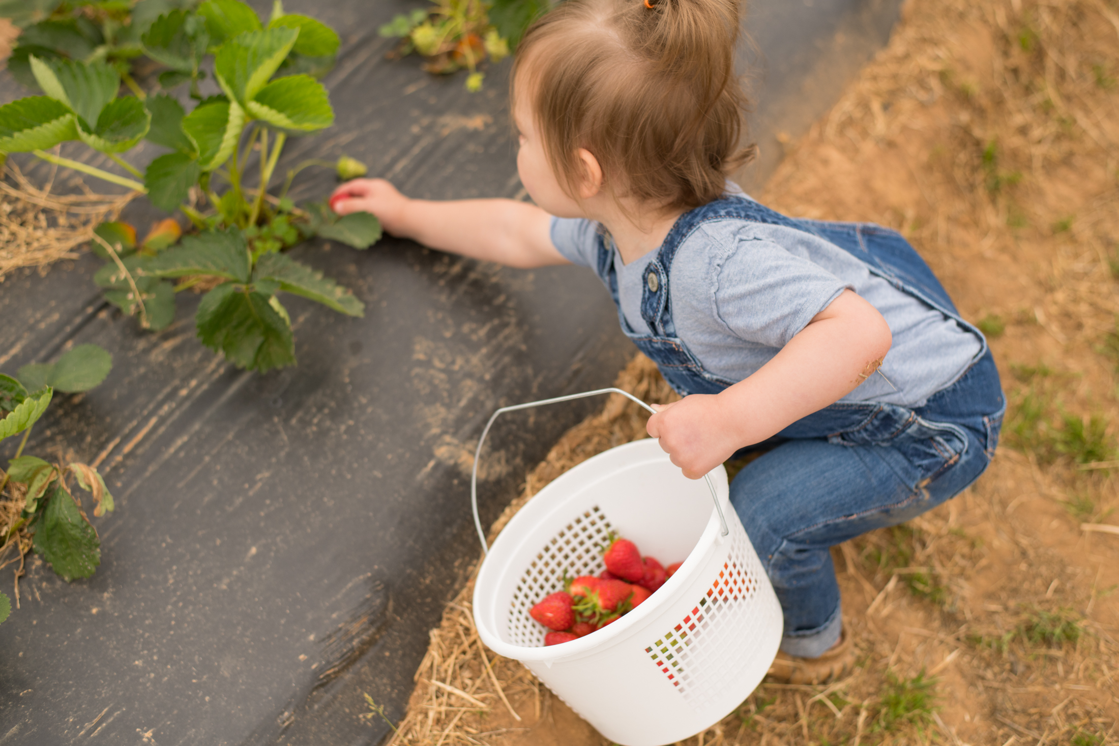 STRAWBERRY PICKING-33.jpg
