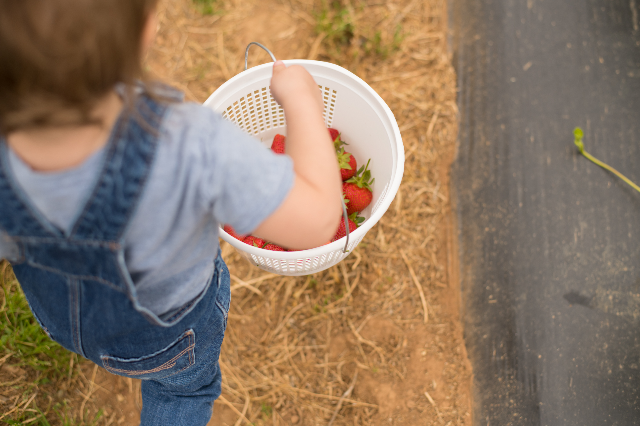 STRAWBERRY PICKING-36.jpg