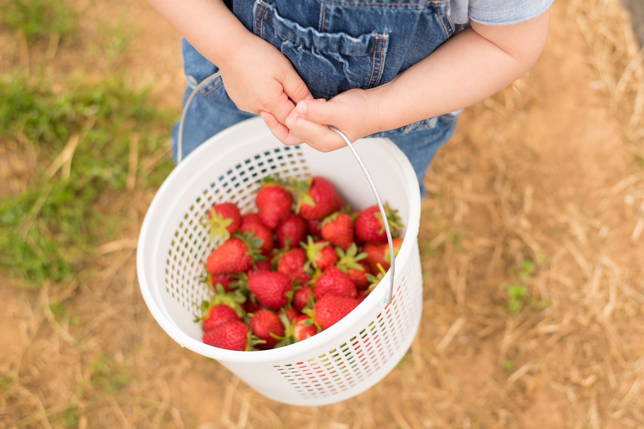 STRAWBERRY PICKING-45.jpg