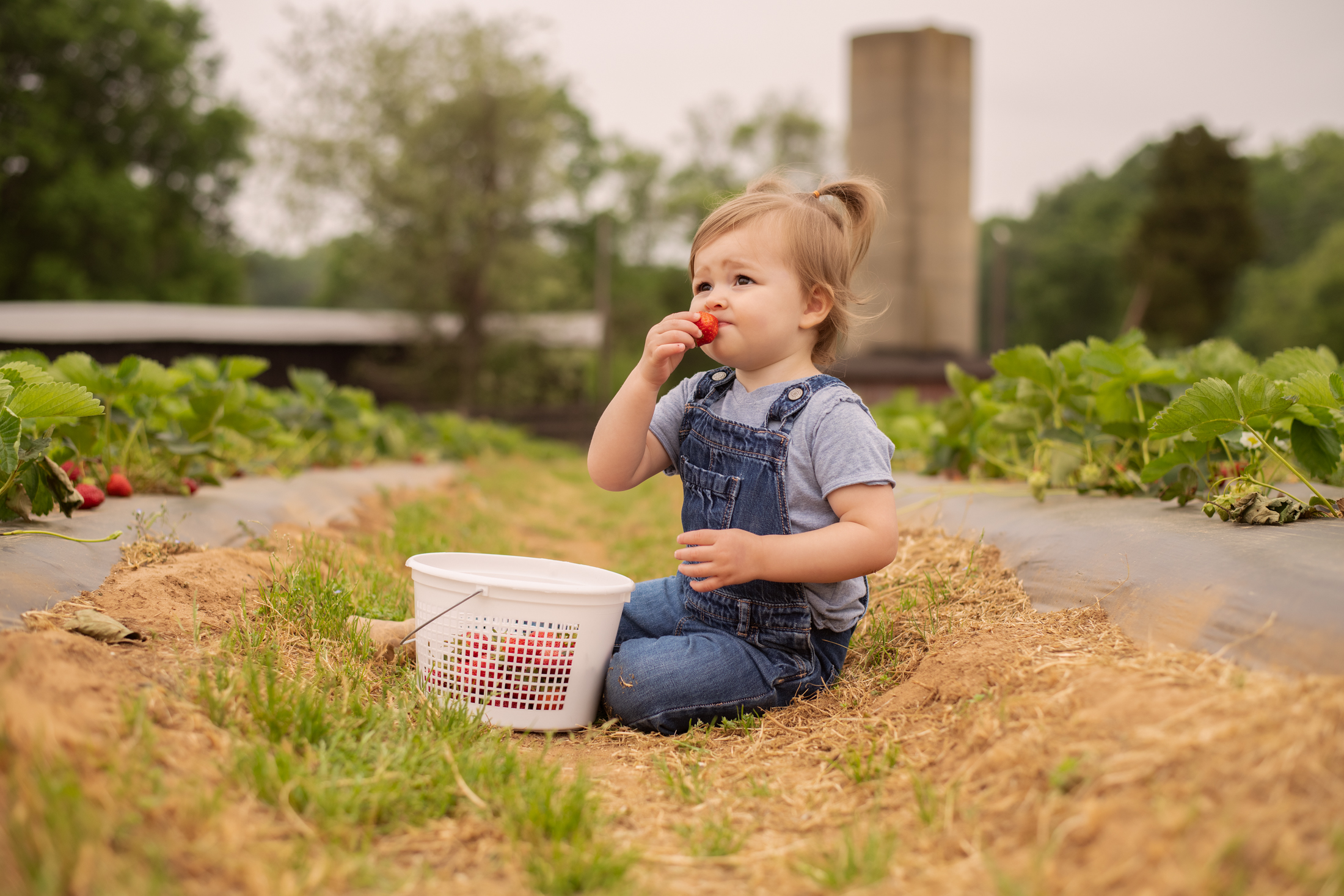 STRAWBERRY PICKING-52.jpg