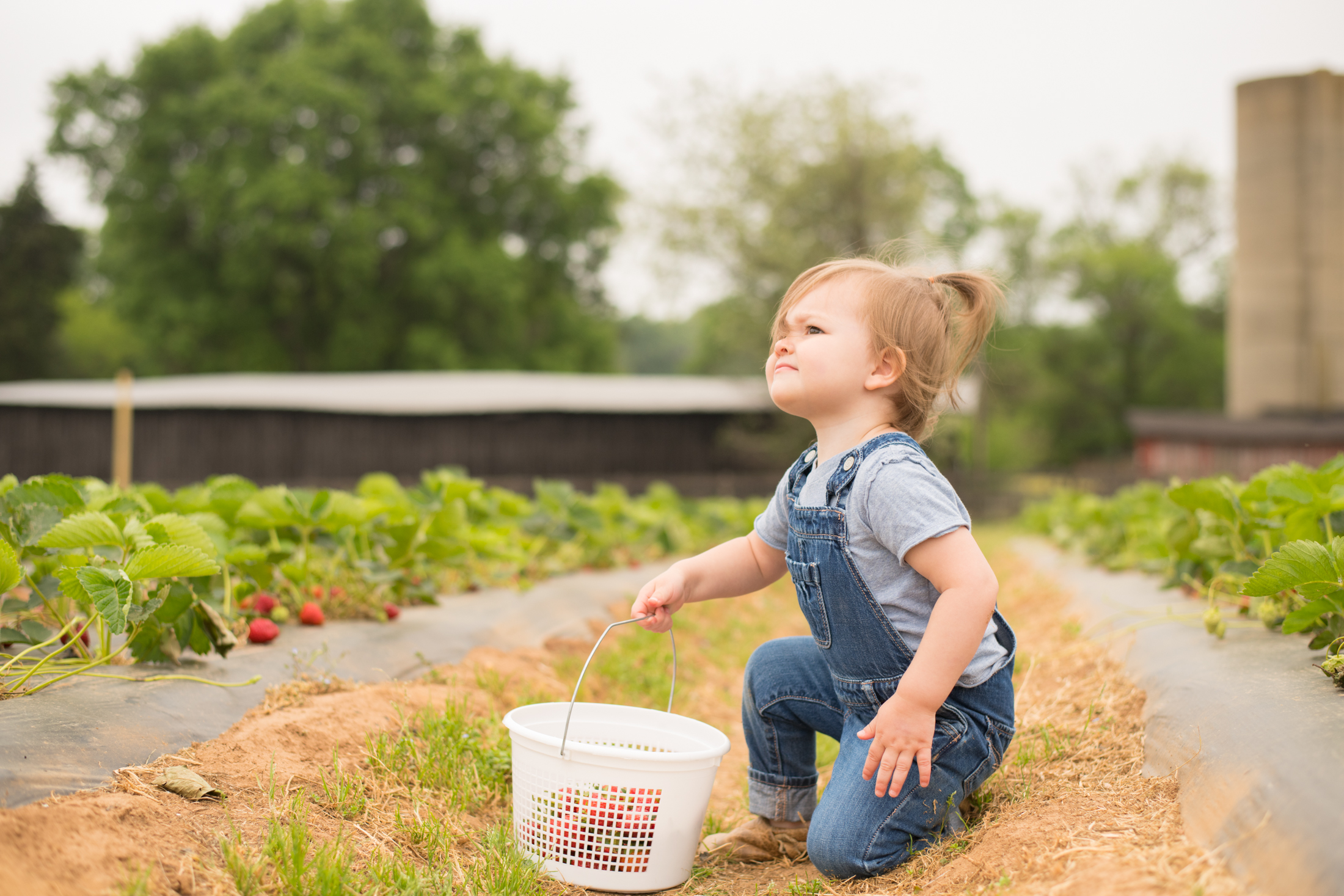 STRAWBERRY PICKING-54.jpg