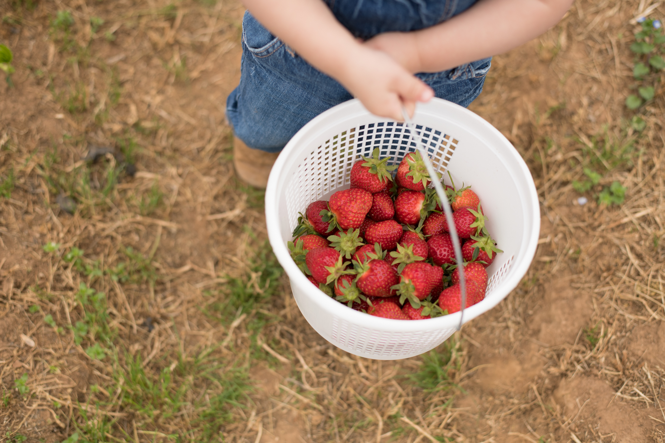STRAWBERRY PICKING-56.jpg