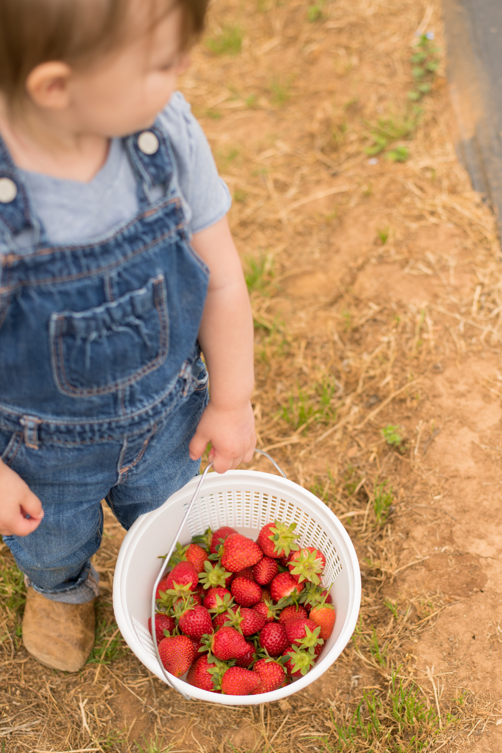 STRAWBERRY PICKING-60.jpg