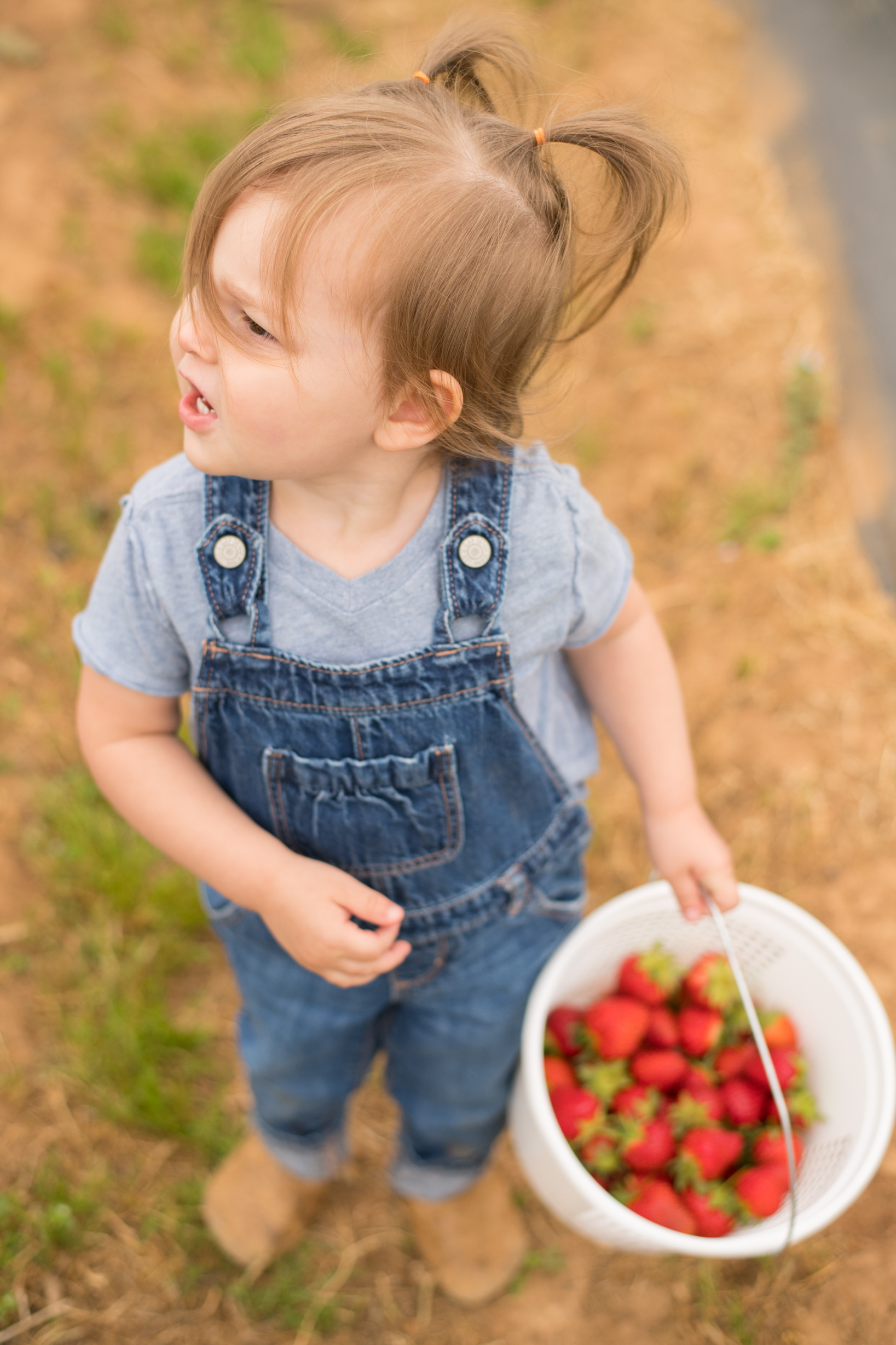 STRAWBERRY PICKING-59.jpg