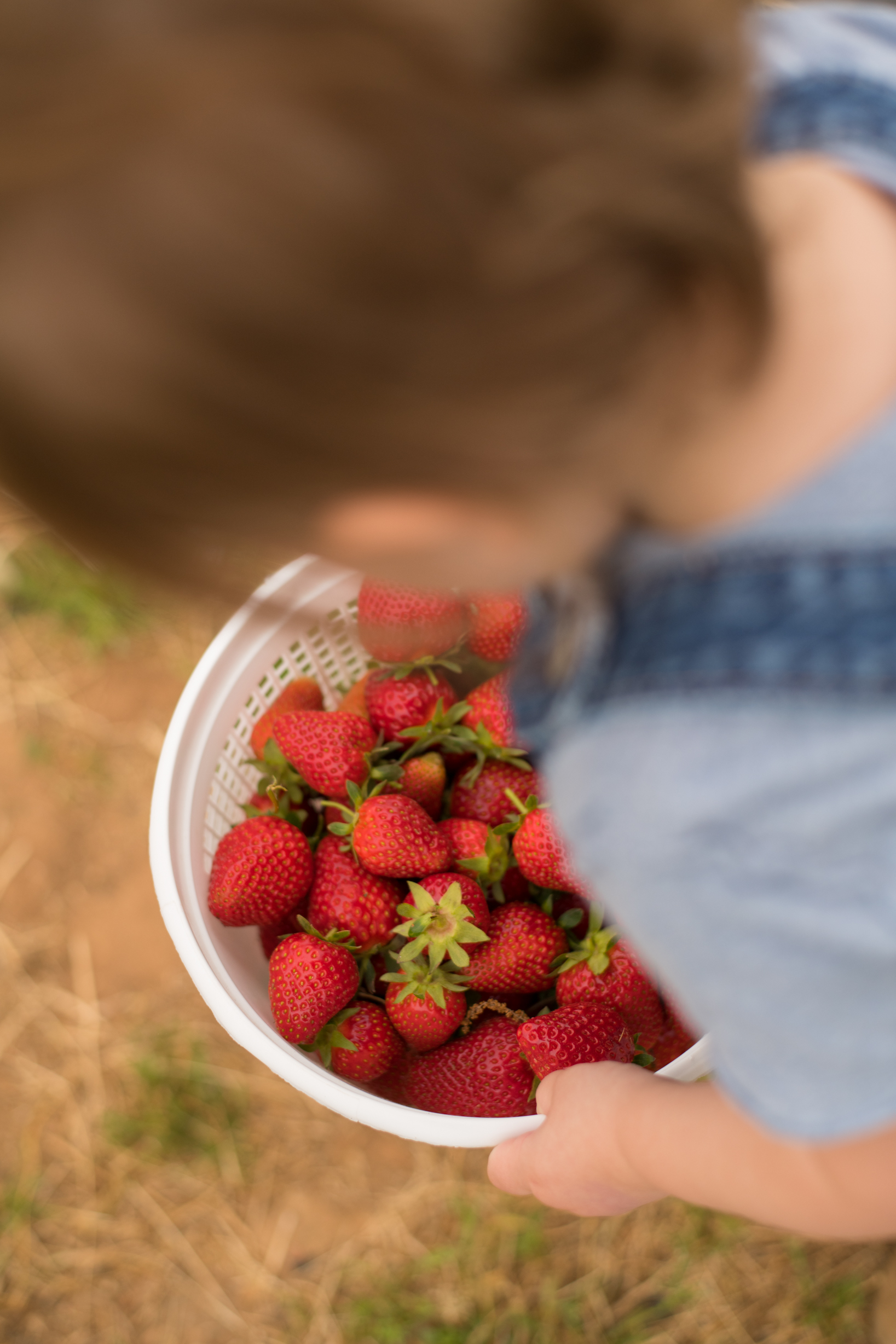 STRAWBERRY PICKING-67.jpg