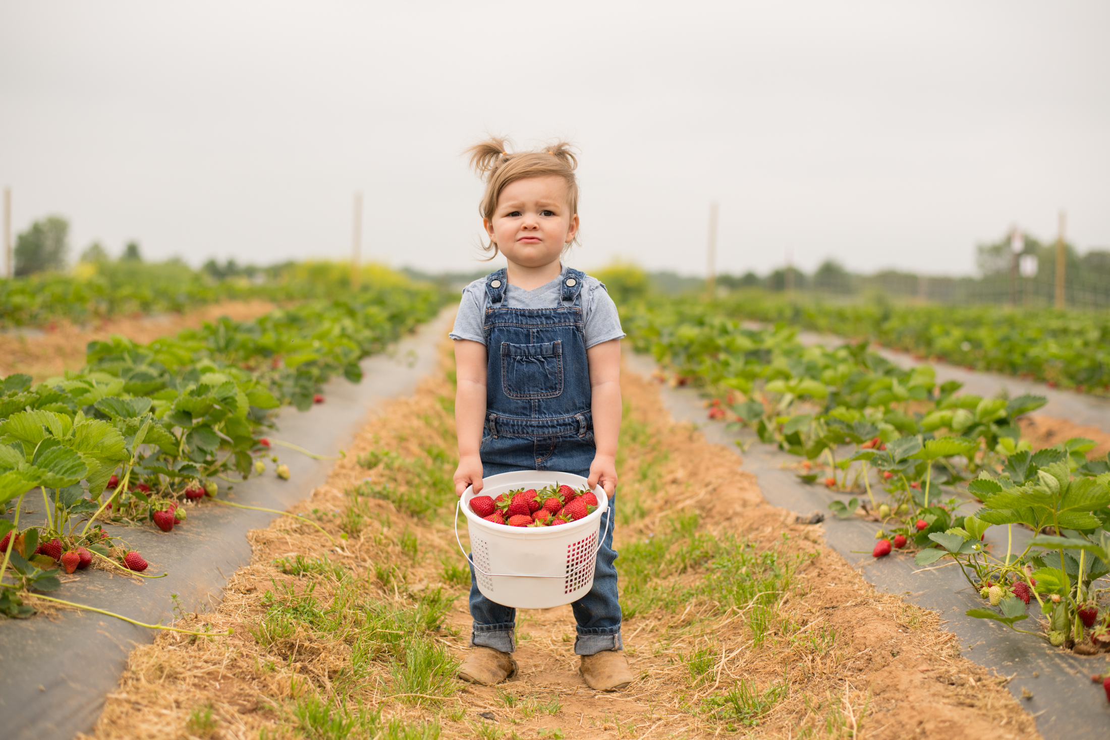 STRAWBERRY PICKING-74.jpg