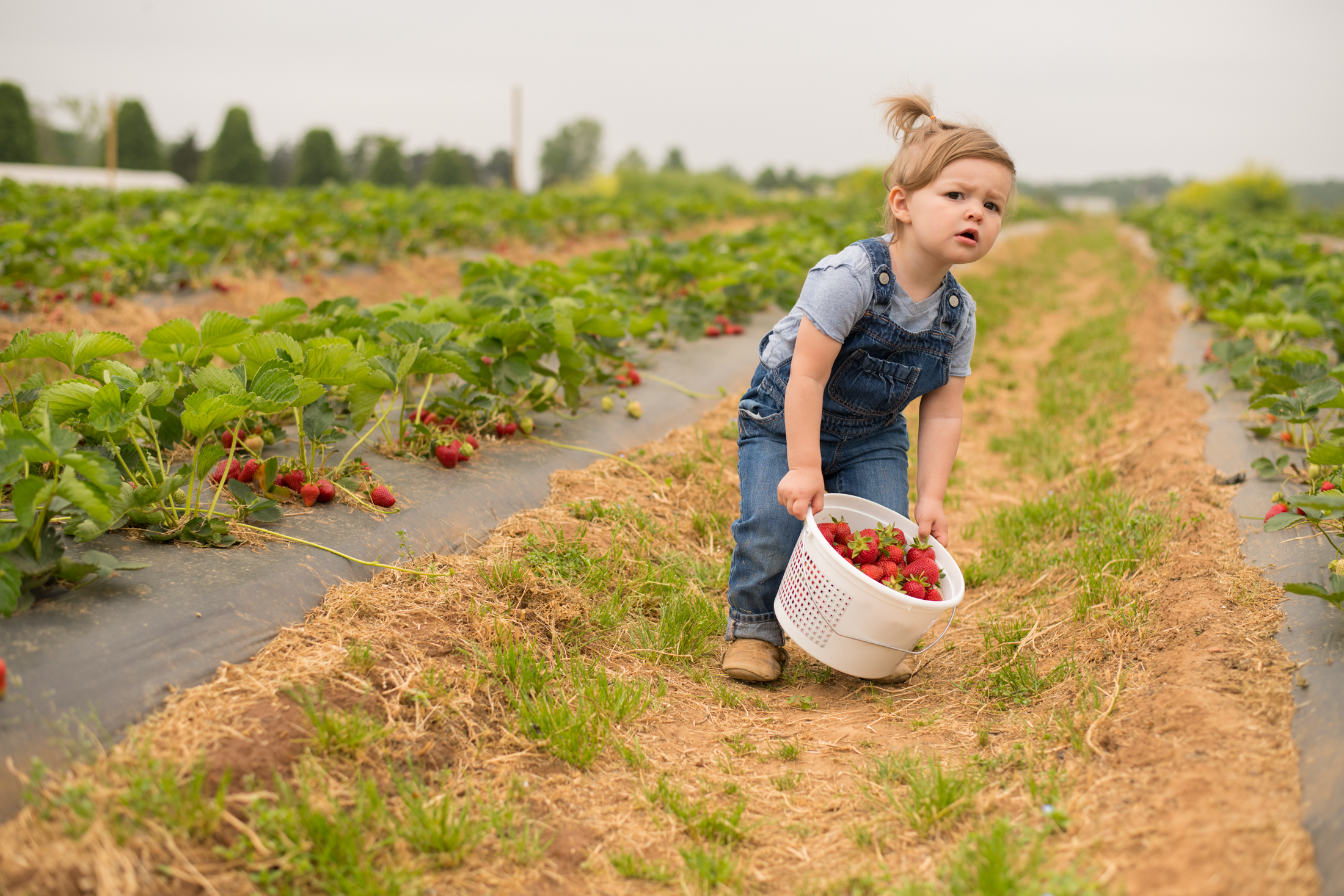 STRAWBERRY PICKING-77.jpg