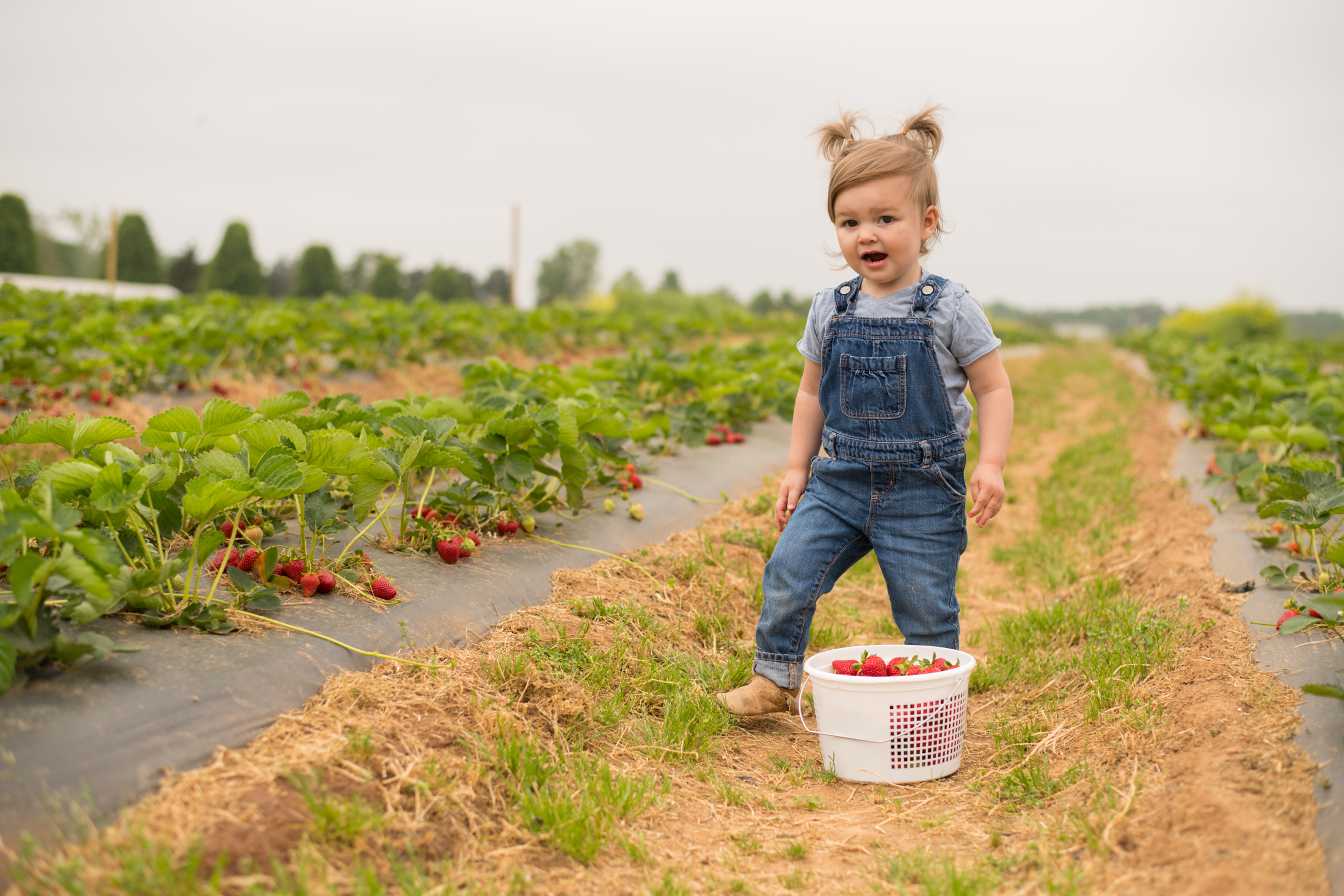 STRAWBERRY PICKING-79.jpg