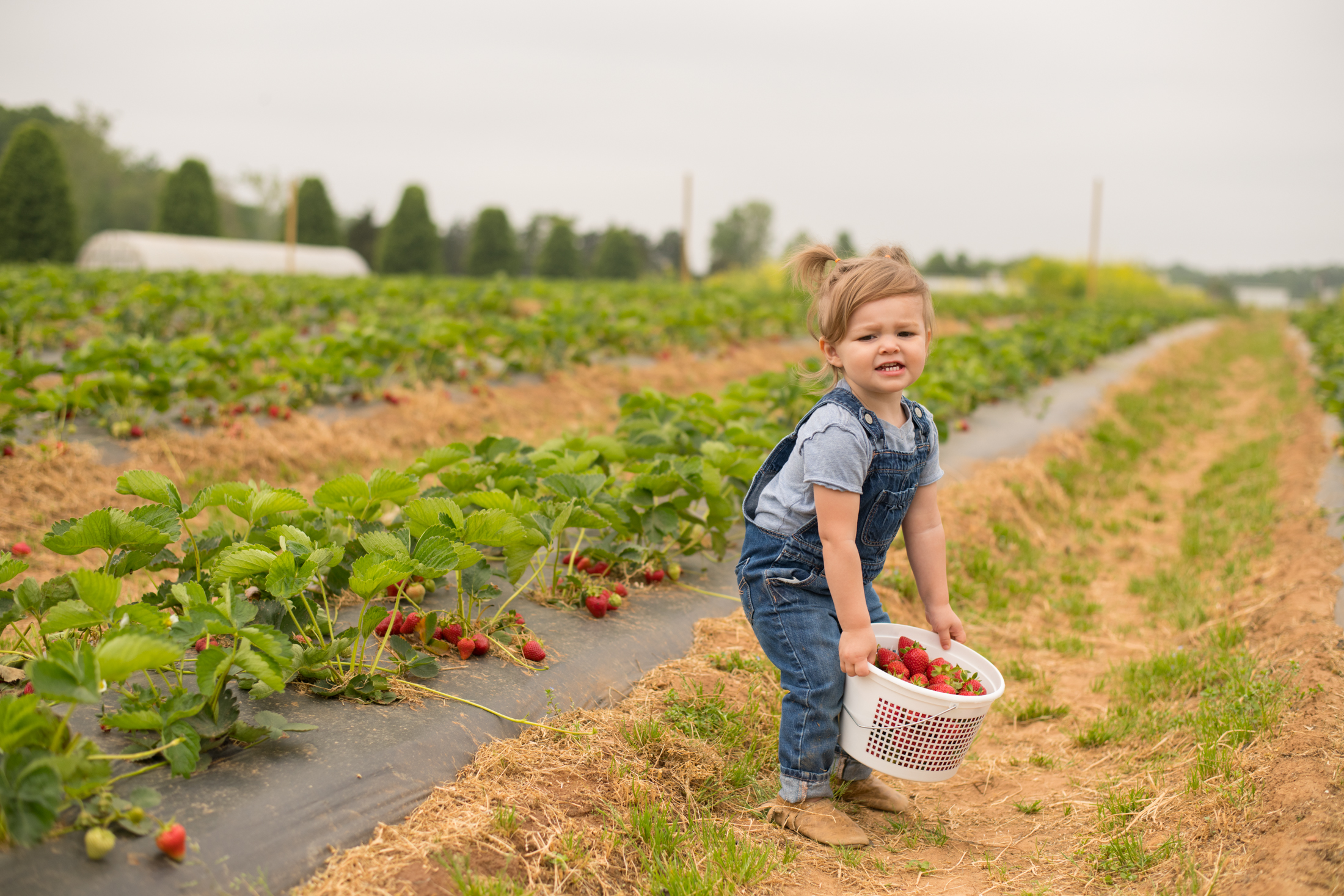 STRAWBERRY PICKING-80.jpg